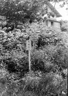 松前角(隅)櫓跡020.JPG