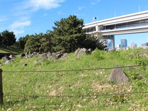 石垣に使われていた石(2)IMG_6613.JPG