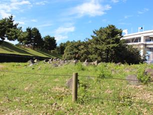 石垣に使われてた石IMG_6612.JPG